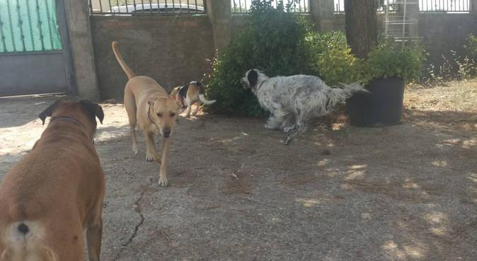 Educador Canino, canguro en Salamanca