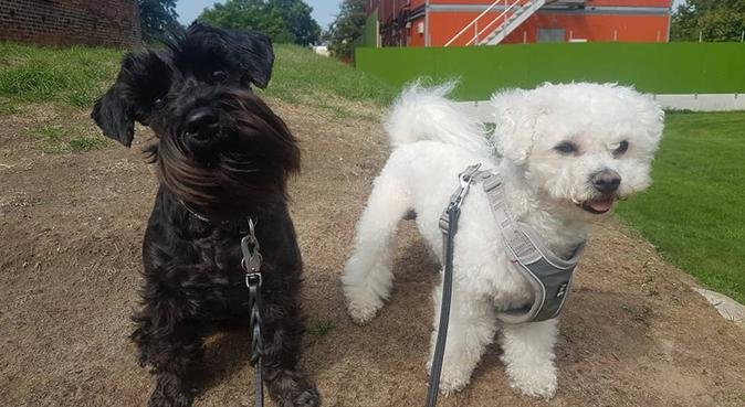 Hundpassning/rastning med Mathias och Kleo, hundvakt nära Helsingborg