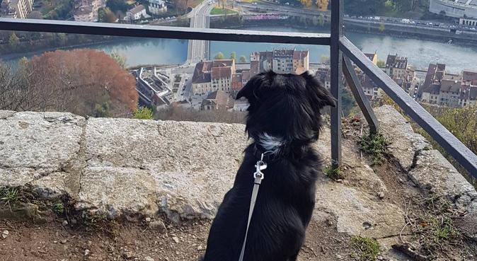 Une nounou passionnée pour vos chiens., dog sitter à Grenoble