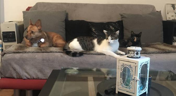 Bienvenue chez Mel :) 🙋🏻♀️, dog sitter à YERRES
