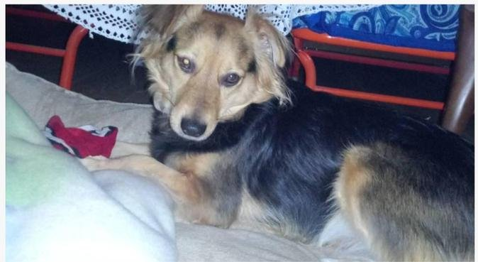 Passeggiate con il vostro migliore amico Santi..., dog sitter a Genova