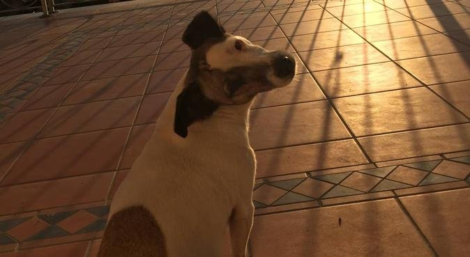 Amore e cura per i vostri amici a quattro zampe, dog sitter a Napoli