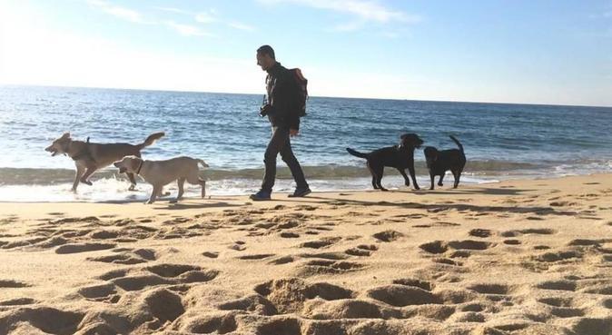 ¡Diversión, adiestramiento, relax y mucho cariño!, canguro en Arenys de Mar