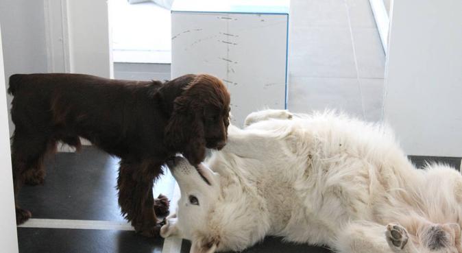 L'adorable Meute de Saint-Priest vous attend !, dog sitter à Saint-Priest