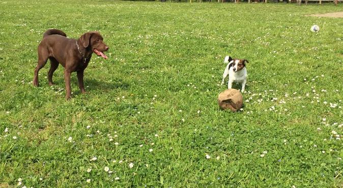 L'ISOLA FELICE, dog sitter a Villa di Serio