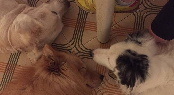 Obbiettivo...STARE BENE !!!, dog sitter a verona