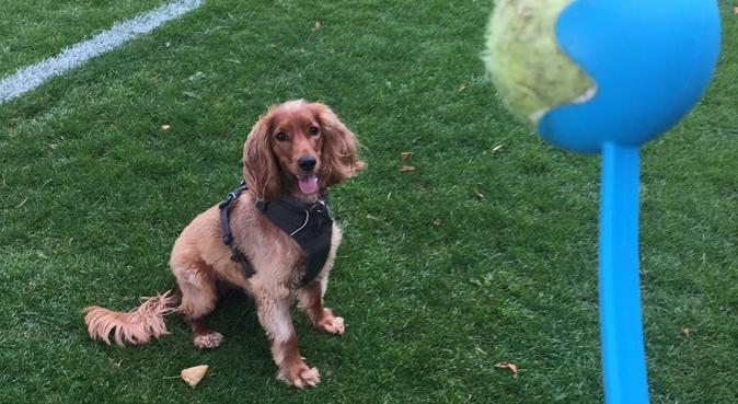 Experienced Dog Lover in Stockbridge, dog sitter in Lothian