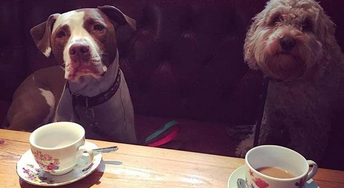 Walk With Basia, dog sitter in London