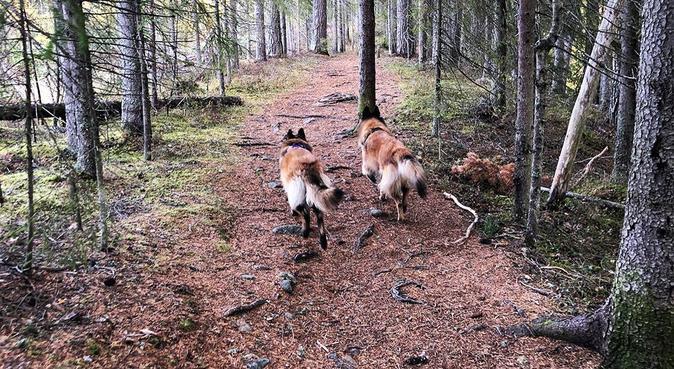 Ut på tur, aldri sur!, hundepassere i Oslo