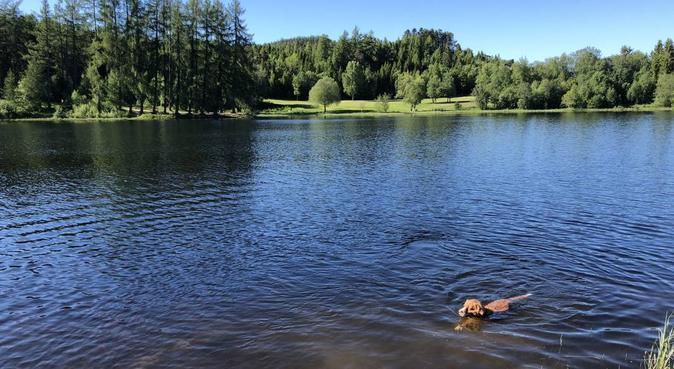 Reis bort med god samvittighet!🐶, hundepassere i Trondheim