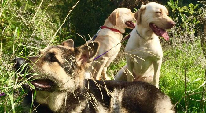 Adoramos a los perros!, canguro en Barcelona