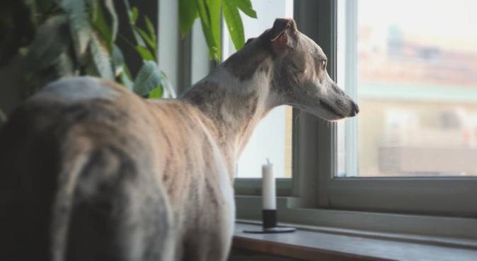 Hundoasen i hjärtat av Lunden, hundvakt nära Göteborg