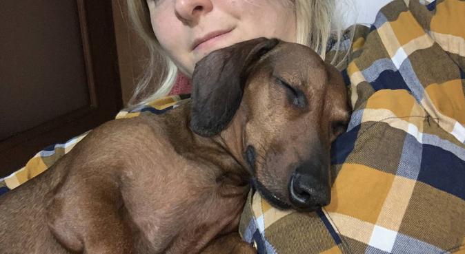 Tutti a spasso 🐾🐾❤️, dog sitter a Verona