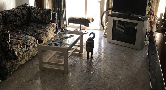 ¿Puedo ayudarte en algo?, canguro en Málaga