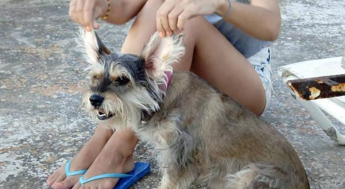 Doble amor para tu mascota, canguro en Madrid