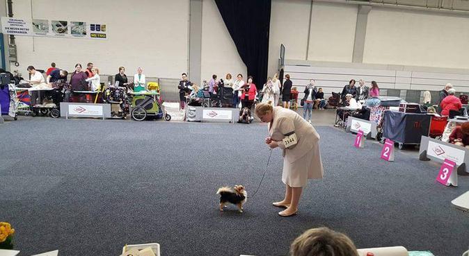 Enthousiaste show handler als uitlaatservice, hondenoppas in Ede