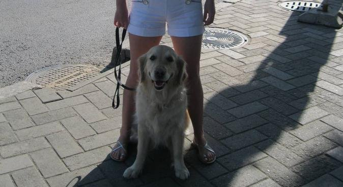 Happy dog walking and play in London, dog sitter in London