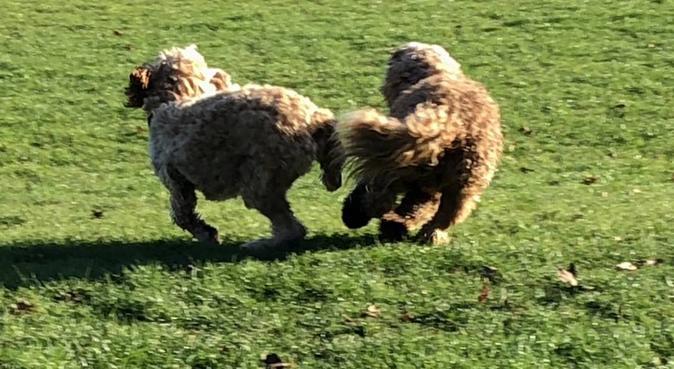 Walking Miss Daisy!, dog sitter in Chislehurst, UK
