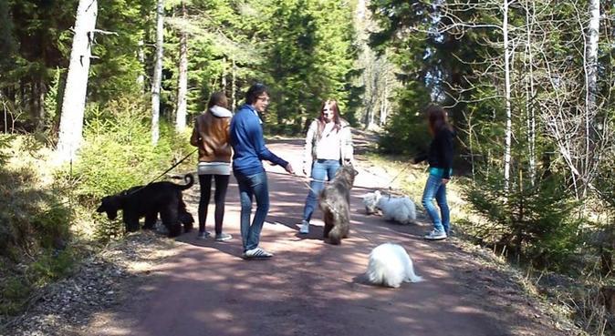 Är hundvan och går gärna på hundpromander!, hundvakt nära Eriksberg, Sverige