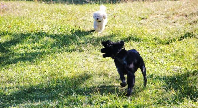 Que du bonheur pour nos amis poilus !, dog sitter à Aix-en-Provence, France