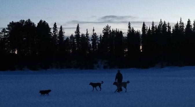 Tur med hund! Personlig hundelufter/instruktør, hundvakt nära Oslo