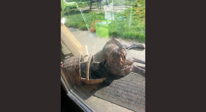 Vos animaux ne passeront pas les vacances seuls !, dog sitter à Tours