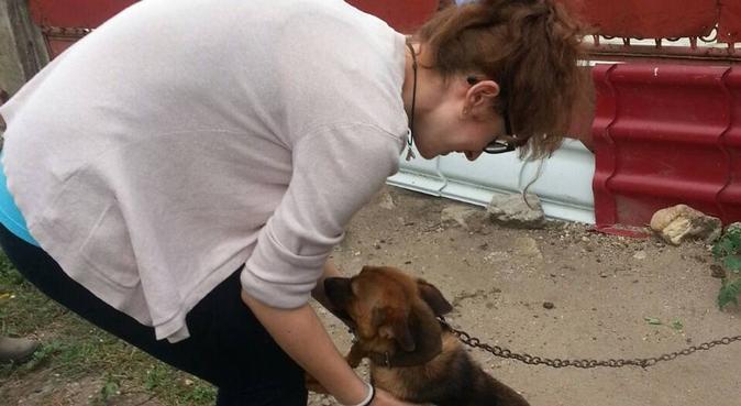 Paseo a tu perro cuando tu no puedas!, canguro en Madrid