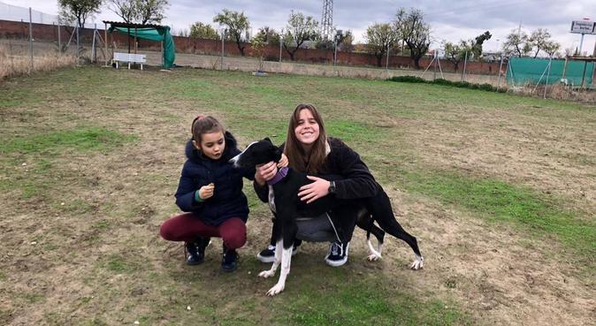 tu perrito en una nube, con paseos muy divertidos!, canguro en Madrid
