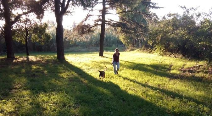 Pensione come a casa!, dog sitter a Roma
