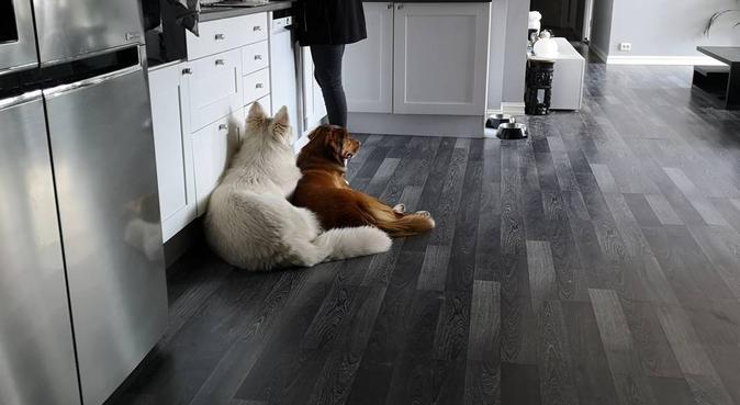 Dogsitting in Drammen, hundepassere i Drammen