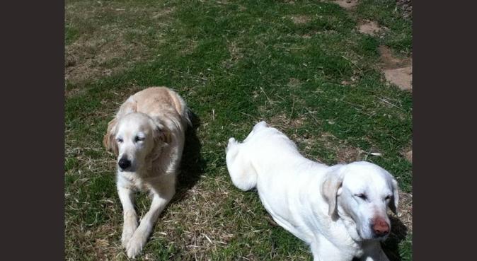 Nuestros perros también merecen vacaciones!, canguro en Viladecavalls