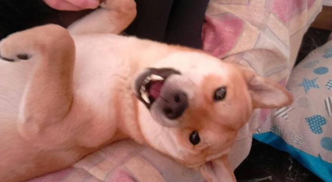 Amore e dedizione per i nostri amici a 4 zampe!, dog sitter a Bologna