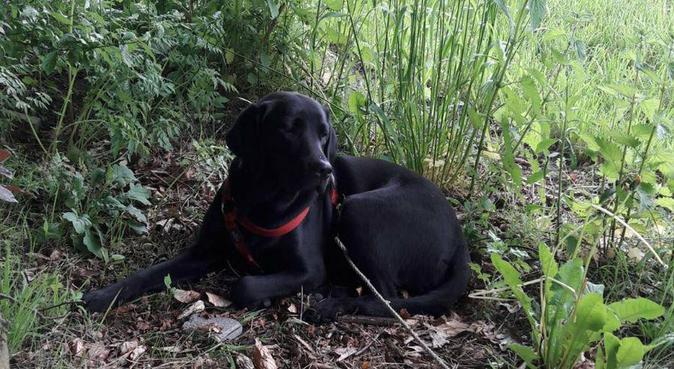 Wandelingen met veel groen, hondenoppas in Rijen