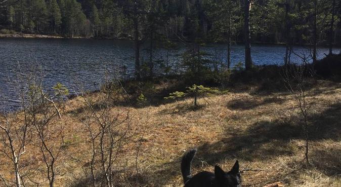 Erfaren og profesjonell hundeeier, hundepassere i Stjørdal
