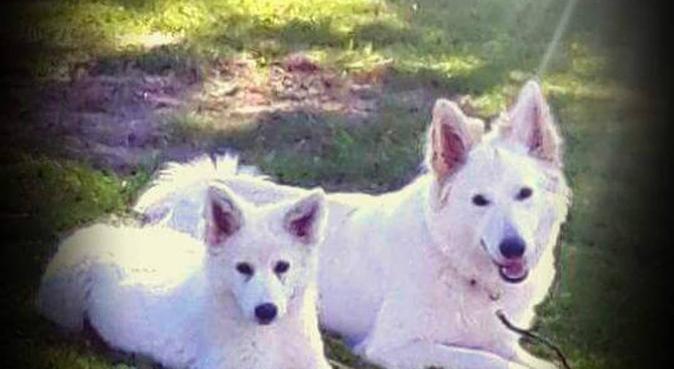 Hundeeier med to hunder som elsker selskap, hundepassere i STJØRDAL
