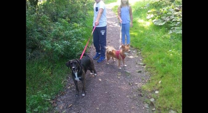 Doggy cuddles and walks in cardiff, dog sitter in Cardiff