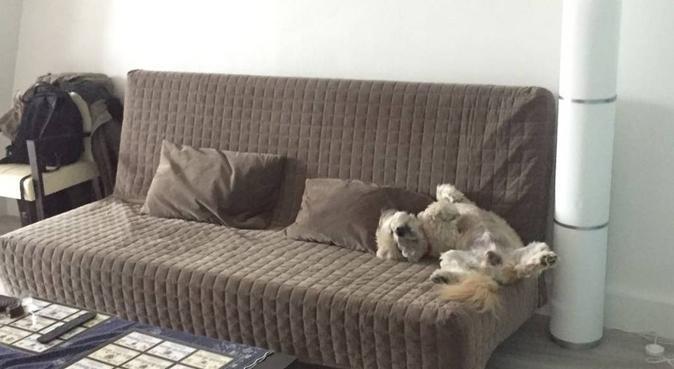 Service d'amour et d'affection illimité, dog sitter à Boulogne-billancourt
