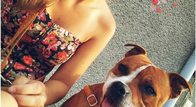 Ce sont les vacances pour votre loulou(te) !, dog sitter à Bourges