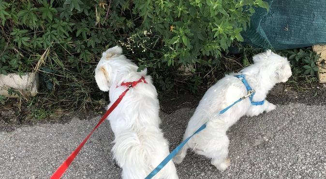 Paseos y cuidado de perros 🐕, hundvakt nära Fuengirola, España