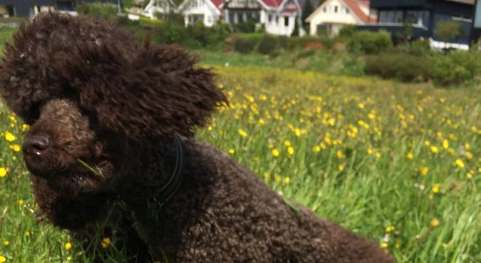 Hundeglad jente klar for tur!, hundepassere i Stavanger