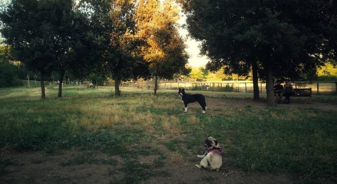 Cura, amore e tanta attenzione per i nostri amici, dog sitter a Roma