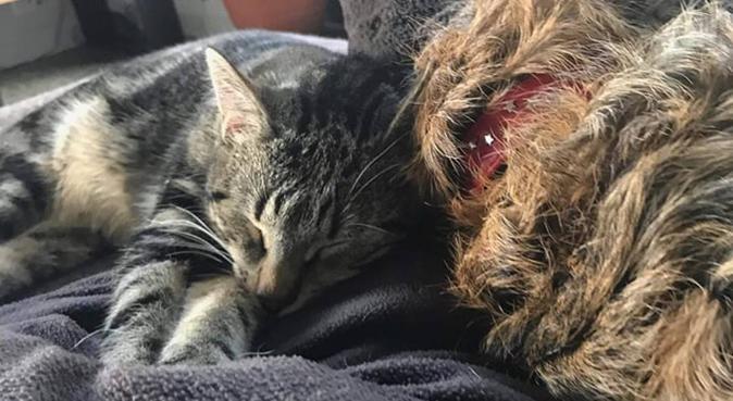 Jeune étudiante amoureuse d'animaux!, dog sitter à Lille