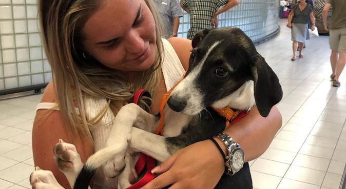 Hondenuitlaatservice met liefde en kwispels, hondenoppas in Amstelveen