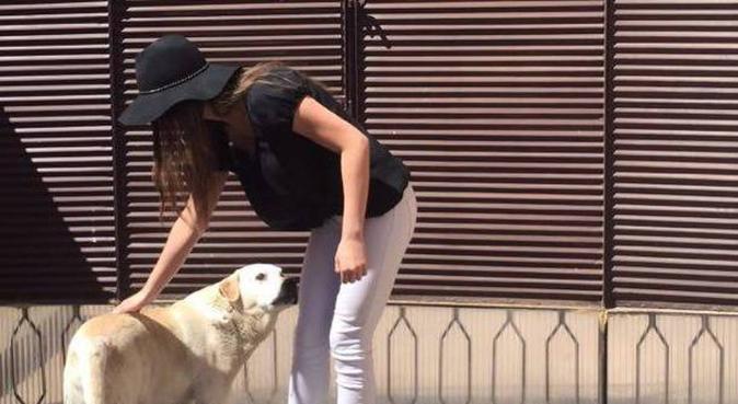 Dog lover offering lots of hugs and cuddles, hondenoppas in Den Haag
