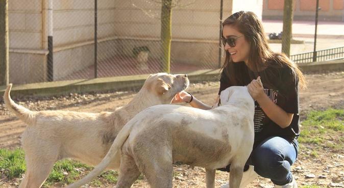 Residencia perruna 5 huesitos, canguro en Sevilla