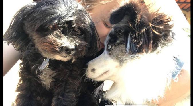 Des journées entières pleines de câlins, dog sitter à Reims, France