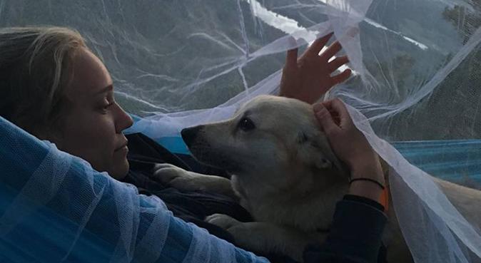 Student som ønsker firbeint venn!, hundepassere i Bergen
