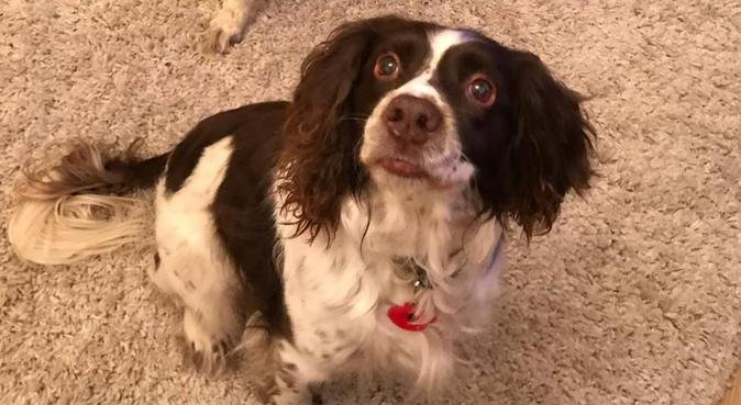 friendly dog loving family in coventry, dog sitter in Coventry, UK