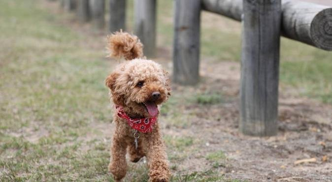 A dog walker you can trust and quality daycare., dog sitter in Newcastle-under-Lyme