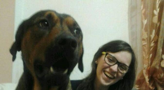 Passeggiate divertenti con un'amante dei cani!, dog sitter a Pisa